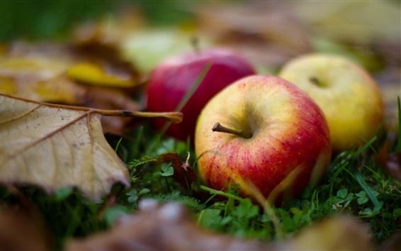 Fond d'écran Pommes mûres, terre, feuille, herbe