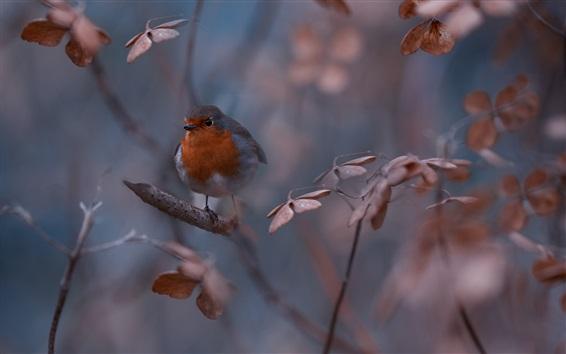 Wallpaper Nature, bird, twigs, bokeh