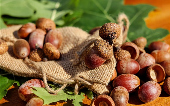Wallpaper Nuts, acorns