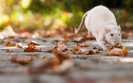 Fondos de pantalla Un ratón en el suelo