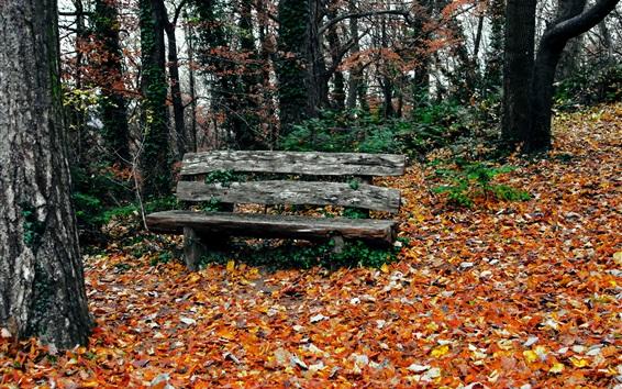 Fond d'écran Parc en automne, arbres, feuilles jaunes, banc