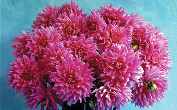 Wallpaper Pink dahlia flowers, bouquet