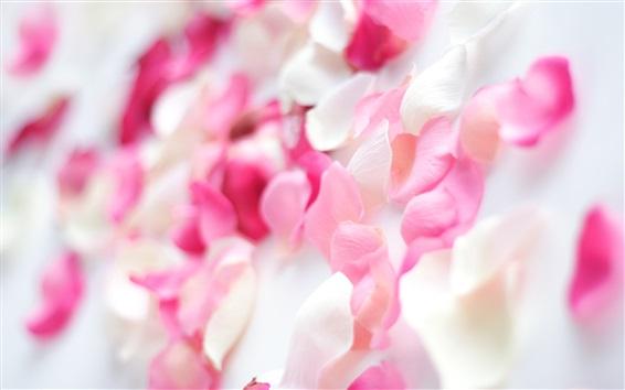Wallpaper Pink rose petals, romantic