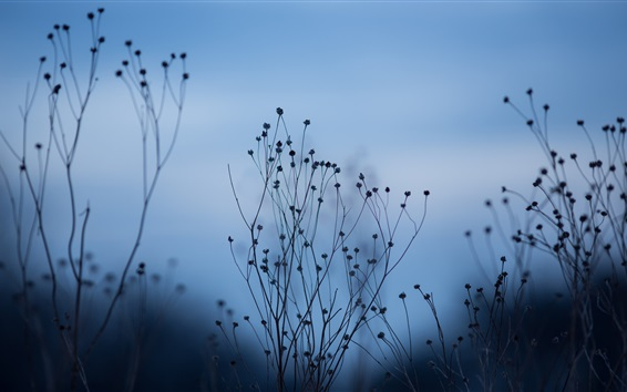 Wallpaper Plants, nature, dusk