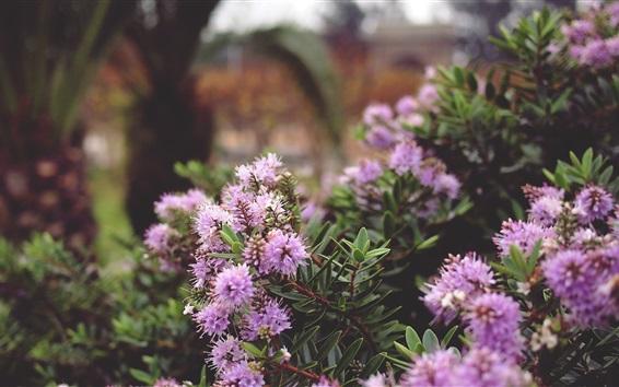Fondos de pantalla Plantas flores púrpuras