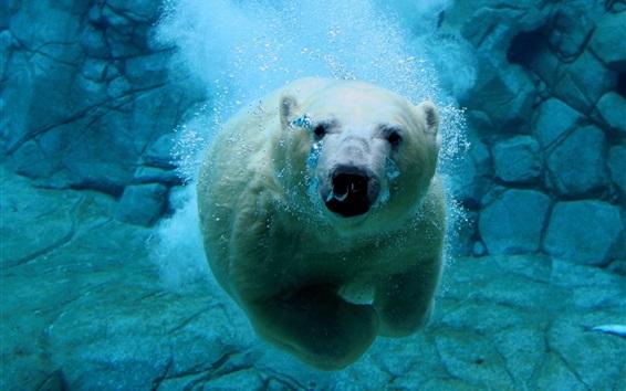 Fond d'écran Ours polaires nage, sous l'eau, bulle