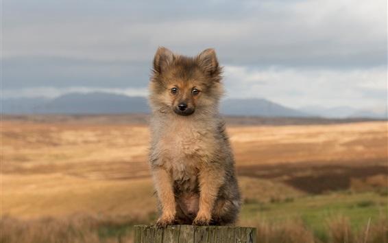 Papéis de Parede Filhote cachorro, sentando, coto