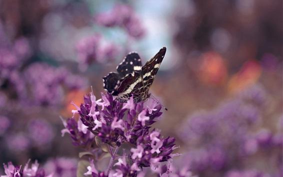 Обои Фиолетовые цветы, бабочка