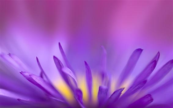 Обои Фиолетовый цветок лепестков макросъемки, размытый фон
