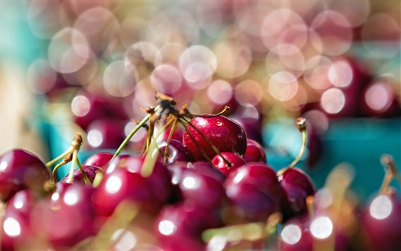 Обои Красная вишня, светлый фон