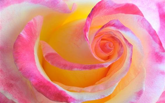 Fondos de pantalla Rose macro fotografía, pétalos de rosa
