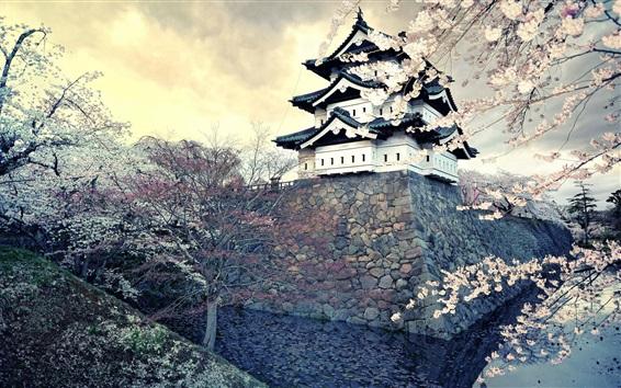 Обои Цветок сакуры, весна, храм, Япония