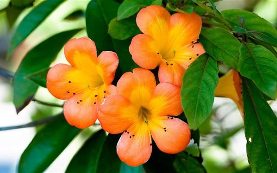 Wallpaper Small orange flowers