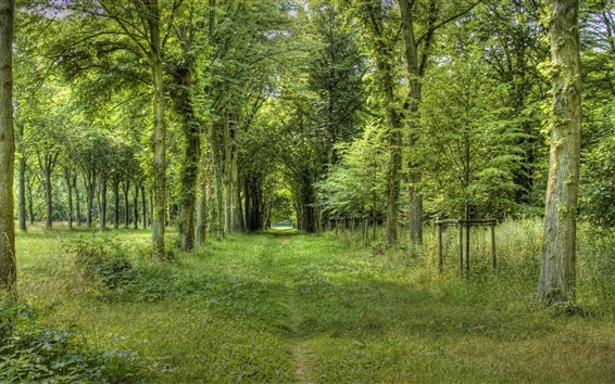 Wallpaper Summer forest, grass, green, path