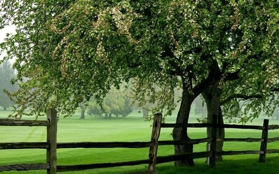 Wallpaper Summer, park, trees, grass, green, fence