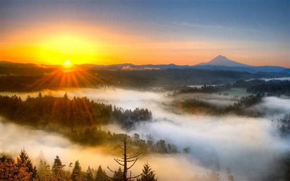 Wallpaper Sunrise, fog, trees, morning, mountains