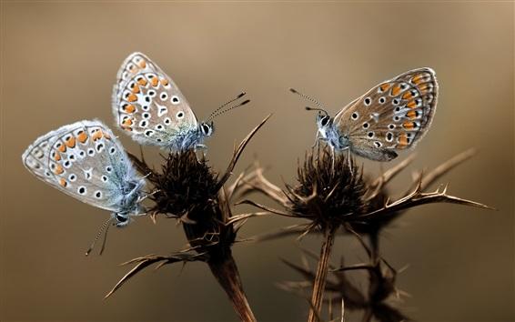 Papéis de Parede Três, borboletas, planta