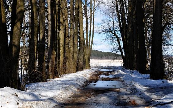 Fondos de pantalla Árboles, nieve, camino, invierno