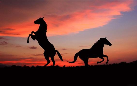 Обои Силуэт двух лошадей на закате