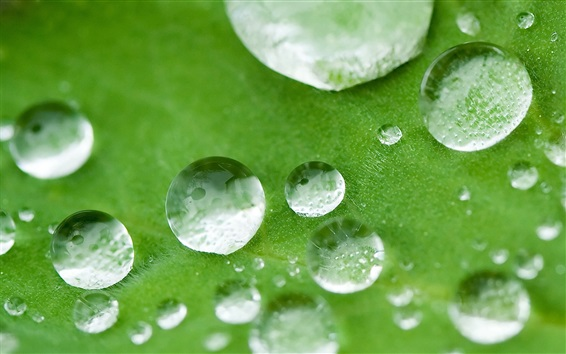 Wallpaper Water drops, green leaf, macro photography
