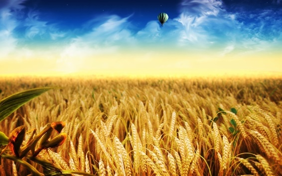 Wallpaper Wheat field, gold autumn, hot air balloon