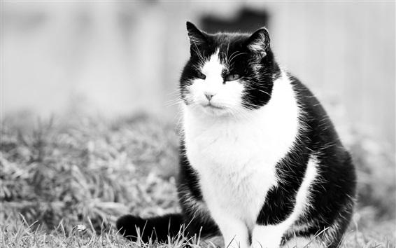 배경 화면 흰색과 검정색, 고양이, 잔디