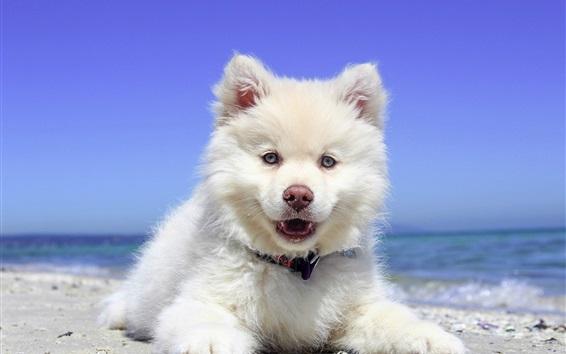 Обои Белая собака вид спереди, пляж