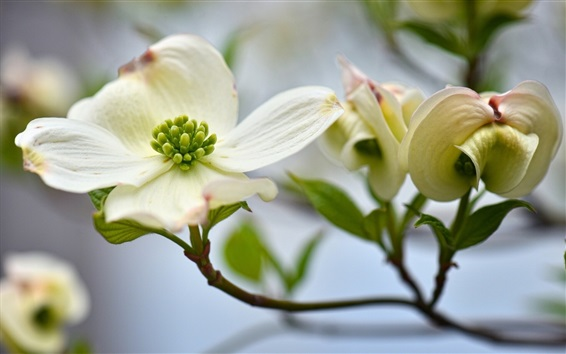 Wallpaper White petals flowers photography