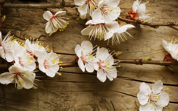 Wallpaper White plum flowers, wood background