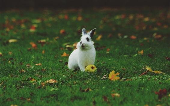 Fondos de pantalla Conejo blanco, manzana, hierba verde, hojas