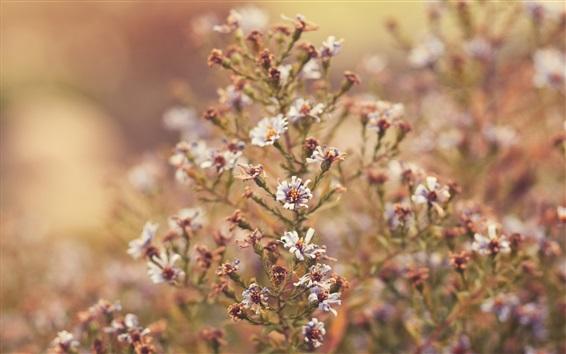 Fondos de pantalla Flores silvestres, hierba