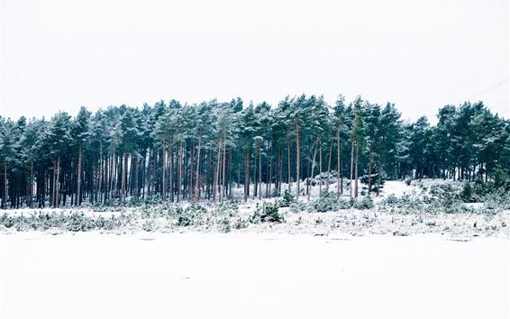 Fondos de pantalla Invierno, bosque, árboles, nieve