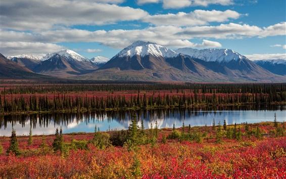 Fond d'écran Alaska, montagne, forêt, automne, rivière, États-Unis
