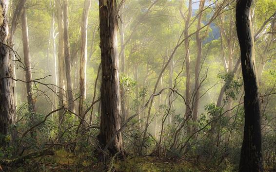 Wallpaper Autumn, forest, trees, fog