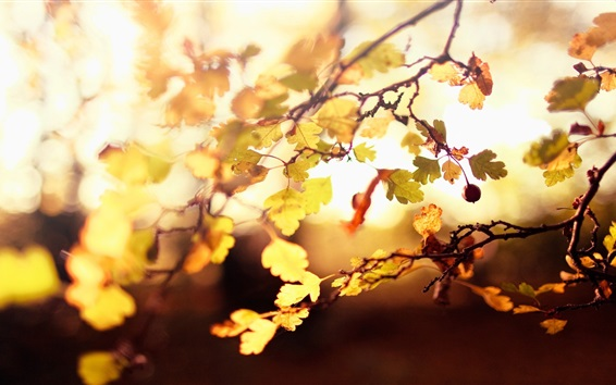 Wallpaper Autumn, leaves, twigs, backlights