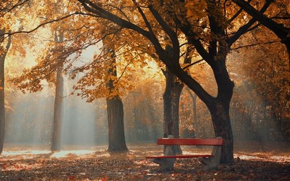 Wallpaper Autumn, park, trees, bench, fog