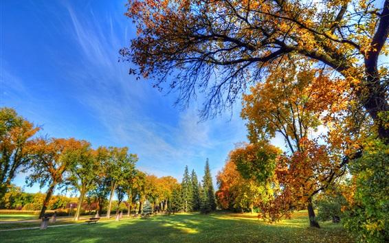 Обои Осенний парк, деревья, трава, скамейка, солнце, голубое небо