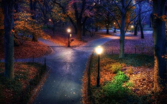 Fond d'écran Automne, parc, arbres, nuit, lumières, chemin