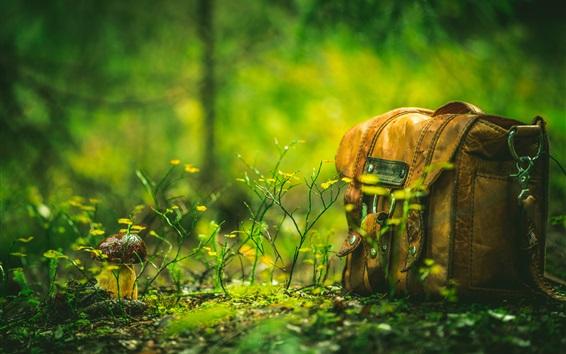 Fond d'écran Sac, forêt, herbe, champignon