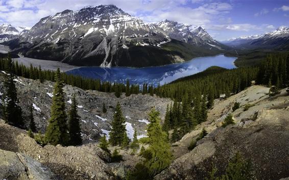 Papéis de Parede Banff, nacional, parque, Peyto, lago, montanhas, floresta, Canadá