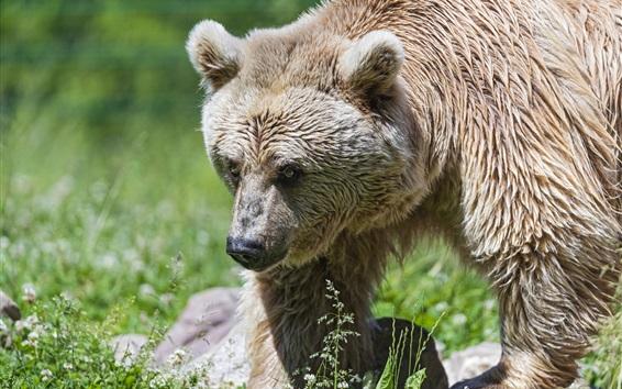 Papéis de Parede Urso procure algo