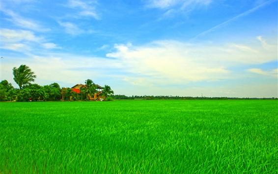 Обои Красивые азиатские тропические пейзажи, дом, зеленое поле, небо, деревья