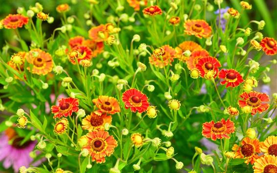 Wallpaper Beautiful flowers, red and orange petals