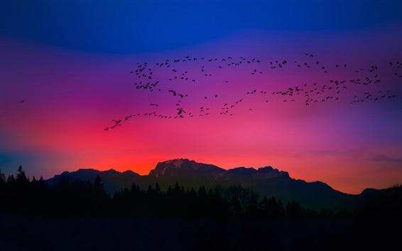 Papéis de Parede Pássaros, pôr do sol, céu vermelho, silhueta, montanhas