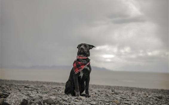 Papéis de Parede Cão preto, lenço, pedras, céu, nuvens