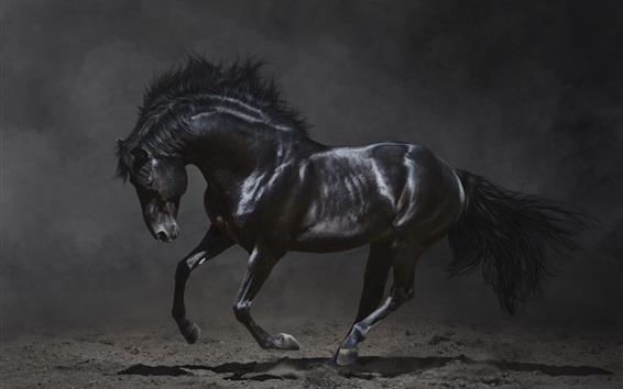 Wallpaper Black horse run in the dark