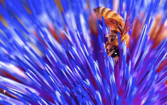 Fondos de pantalla Flor azul macro fotografía, abeja, insecto