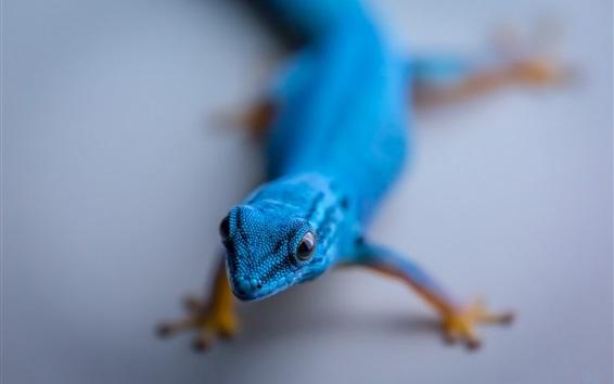Обои Голубая ящерица
