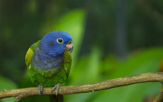 Papéis de Parede Papagaio azul, galhos