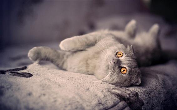 Papéis de Parede Gato britânico shorthair dormir na cama